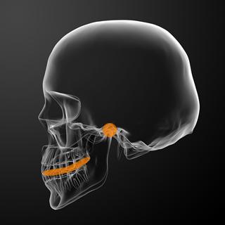 顎関節のレントゲン写真